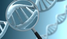 Intelligence DNA research